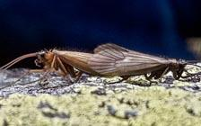 Kosovar Biologist Names Newly Discovered Insect after Coronavirus