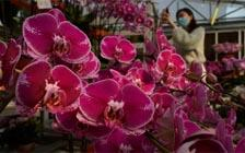 Orchids: A Project for Those at Home