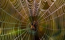 Listening to a Spider's Web