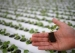 Singapore Seeks to Increase Local Food Production with Rooftop Farming(翻译)