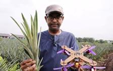 Malaysian Researchers Make Drones From Pineapple Leaves