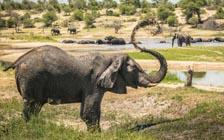 Male Elephants Are Not Loners After All