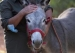 Does the 'Carrot-and-Stick' Approach Come From Donkeys?