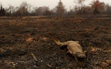 Weather Event May Be Cause of Brazil's Pantanal Fires