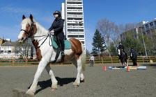 Club Teaches Kids About Horse Riding and Life
