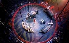 France to Ban Wild Animals from the Circus