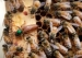 US Scientists: Honeybees Show Improvement After Bad Year